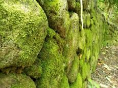 Waimea Wall