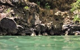 Waimea Water
